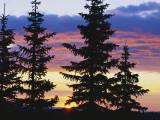 Silhouette of Trees at Sunrise  Sierra Madre  Medicine Bow-Routt National Forest  Wyoming  USA