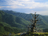 Twisted Tree in Lush Landscape  Bear River Range  Cache National Forest  Cache Valley  Idaho  USA