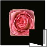 Cubic Pink Rose