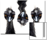 Three Emus