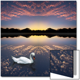Composited Image of Swan in Lake