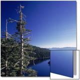Fannette Island in Emerald Bay with Sugar Pine  Emerald Bay State Park  Lake Tahoe  California