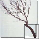 Silhouette of a Tree Branch