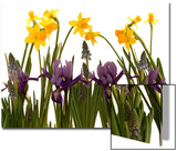 Still Life Photograph  a Collection of Spring Flowers in One Frame