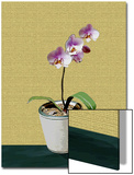 Orchid Plant with Flower in Pot
