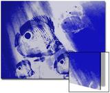 Four-Eye Butterflyfish Swim in the Blue Sea