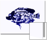 Blue Dapple Fish Print