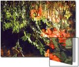Reflections  West Fork of Oak Creek  Sedona  Arizona  USA