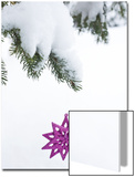 Pink Star Christmas Ornament Hanging Off Pine Branch in Forest  Saratoga Springs New York