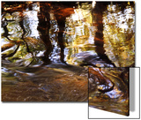 Trees Reflected in Oak Creek  Sedona  Arizona  USA