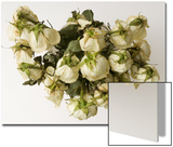 Dead  Drooping White Roses