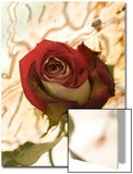Red Rose with Abstract Drawing Background