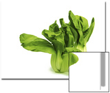 Shanghai Bok Choy on White Background