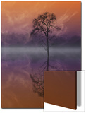 Composited Image of Tree and Reflection