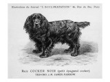 Black Cocker Spaniel Dog Standing Side on with His Head Turned Face On