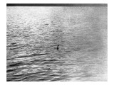An Infamous Image of the Loch Ness Monster