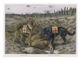 German Shepherd Dogs Used by the Red Cross to Locate Wounded Soldiers