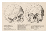 Gall's Phrenological System - the Skull Seen from Side and Front