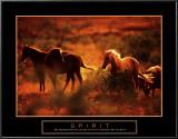 Spirit: Horses