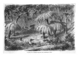 Scene in the Bush - Hunting the Lyre Bird