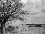 A Suffolk (England) Landscape  Near Blythburgh  with its Church Tower in the Distance