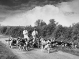 Two Kennel Workers Exercising Foxhounds on an English Country Lane