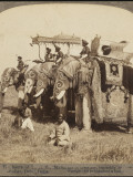 State Elephants of the Maharajah of Gwalior Superbly Decorated for the Delhi Durbar