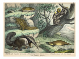 Various Quadrupeds: Giant Anteater  Brown Platypus  Pangolin  Armadillo  and Three-Toed Sloth