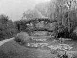 A Famous View in Monet's Garden  Showing the Lilypond and Bridge