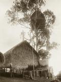 A Fantastic Treehouse at Ekiti Village  Sogeri  Papua New Guinea