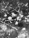Skulls and Bones Litter the Ancre Valley Battlefield