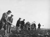 Refugees Working in the Fields Near Kitchener Camp During World War Ii