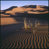 Desert Landscape at Merzouga  Morocco  North Africa