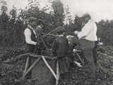 Family Working in Hop Fields  Kent