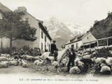 Sheep in the Street/Village at Gavarnie  France