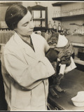A Veterinary Surgeon Holding a Cat at the Cat's Hospital  Hampstead  London