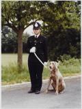 Metropolitan Police Dog Trainer Training His Weimaraner Dog