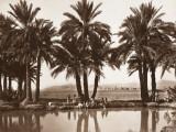 Algerian Oasis - Biskra