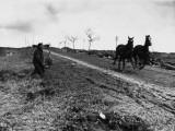 La Boisselle 1916