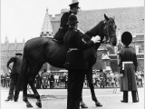 Metropolitan Police Officer Talks to Mounted Police Officer on a Police Horse