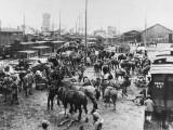 Indian Cavalry Regiment 1914