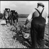Ploughing Contest 1950s