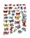 Butterflies  c1955