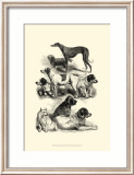 International Show Dogs II  c1863