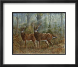 Deer Family II