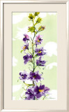 Delphinium