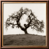 Hillside Oak Tree