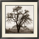 Country Oak Tree