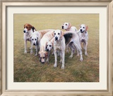 Seven VWH Foxhounds