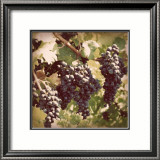 Vintage Grape Vines I